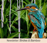 Newsletter: Birdies & Bamboo