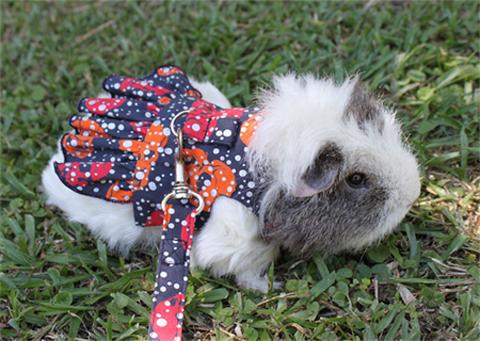 guinea pig clothing