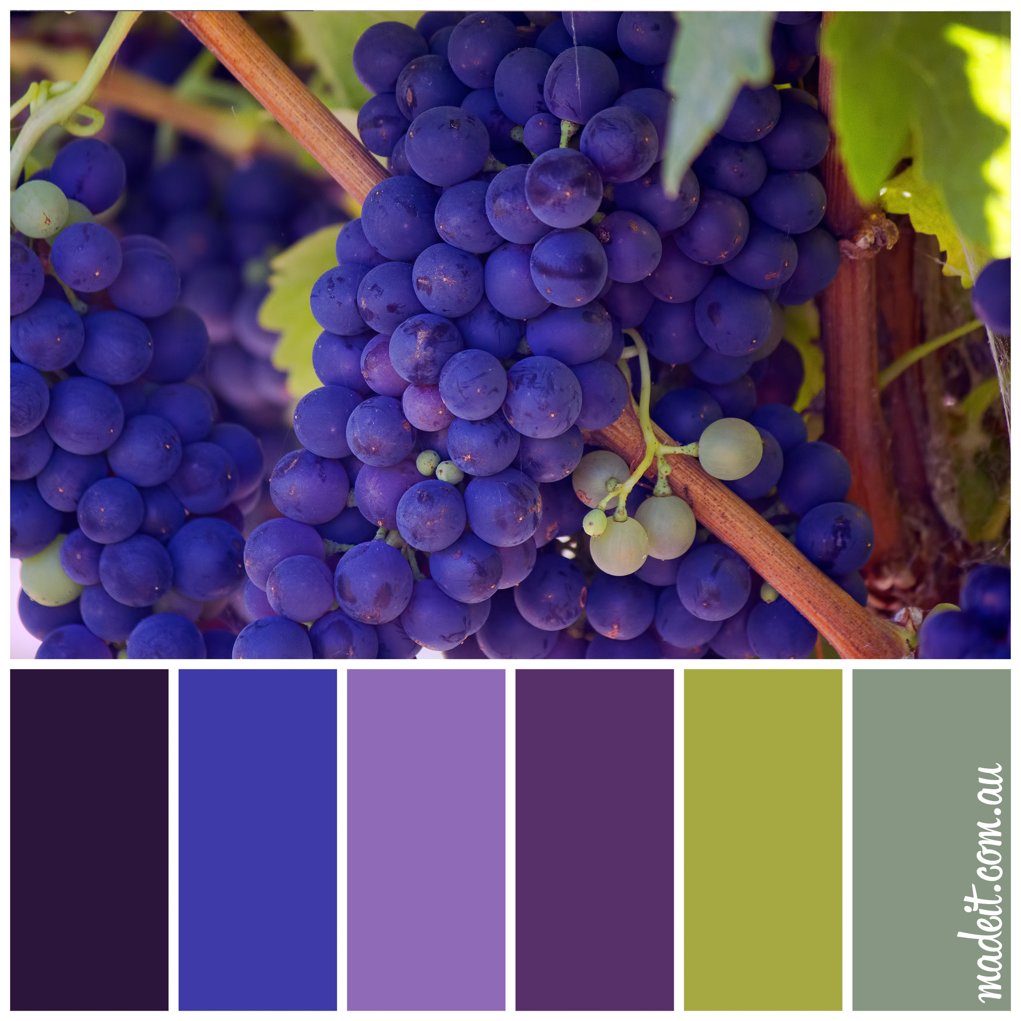 Colour Inspiration: deep purple and lush green foliage of ripe grapes on the vine