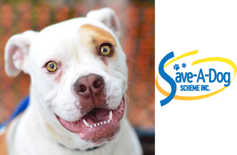 Rosie, a beneficiary of the Save-A-Dog Scheme