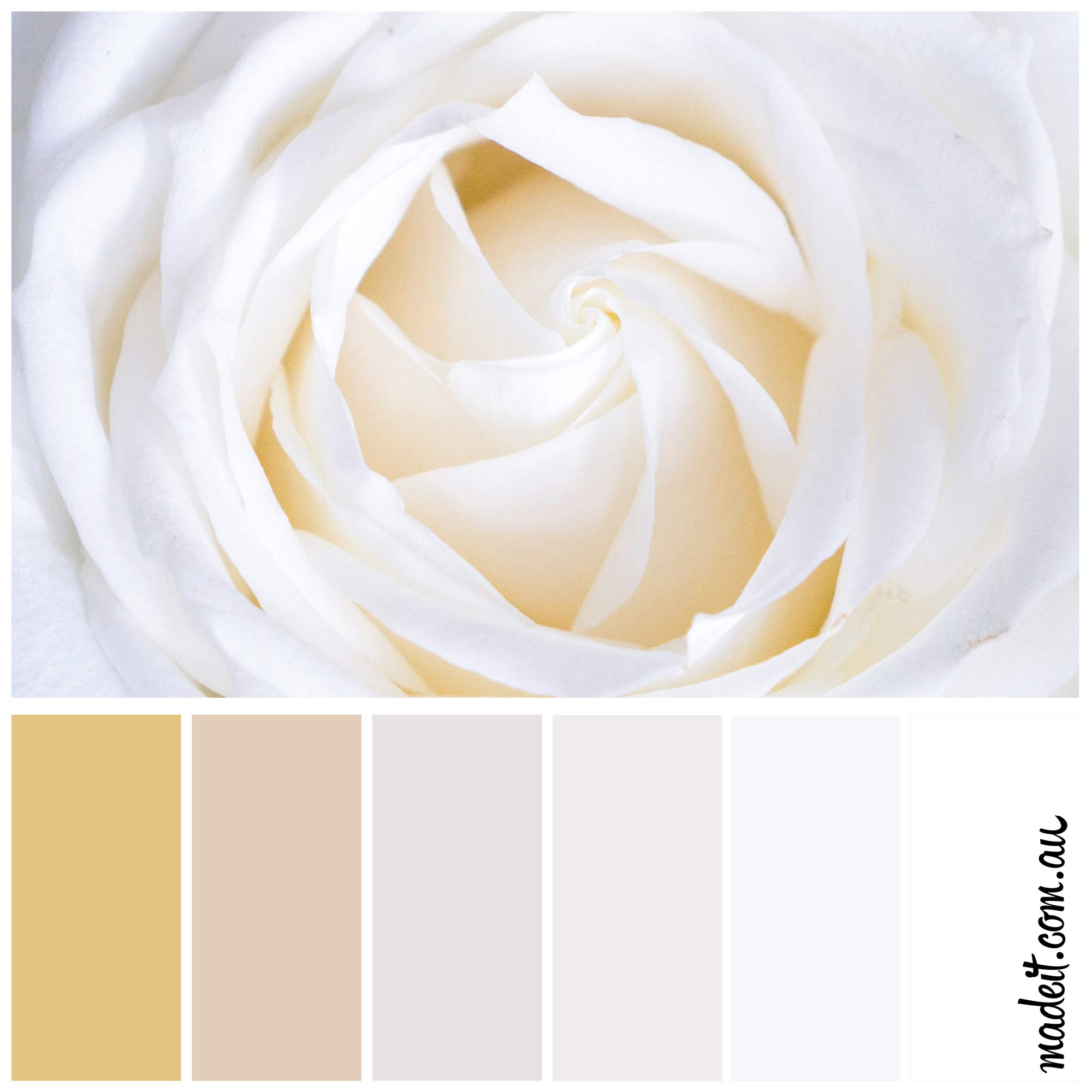 Botanical colour inspiration: white roses