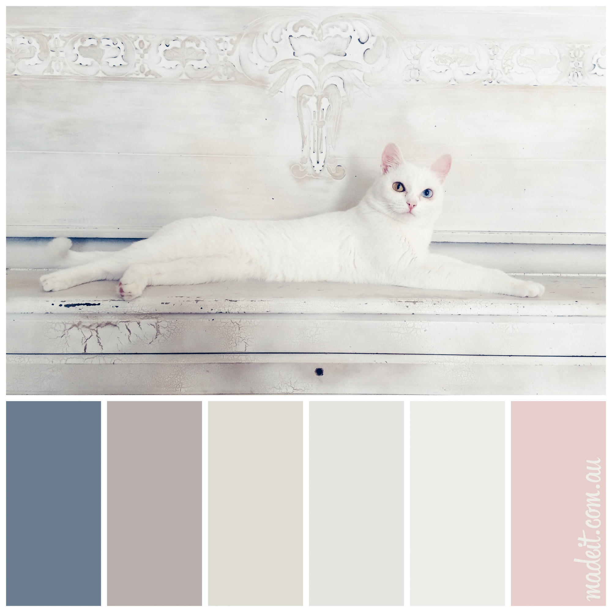 Feline colour inspiration: regal white cat with two-tone iris