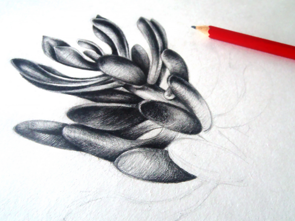 A monochrome plant drawing in progress from Sara's notebook