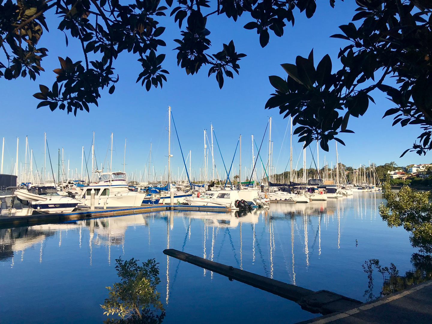 Boats in Manly Harbour, Queenslad, with the leaves of a Morton Bay Fig in the foreground