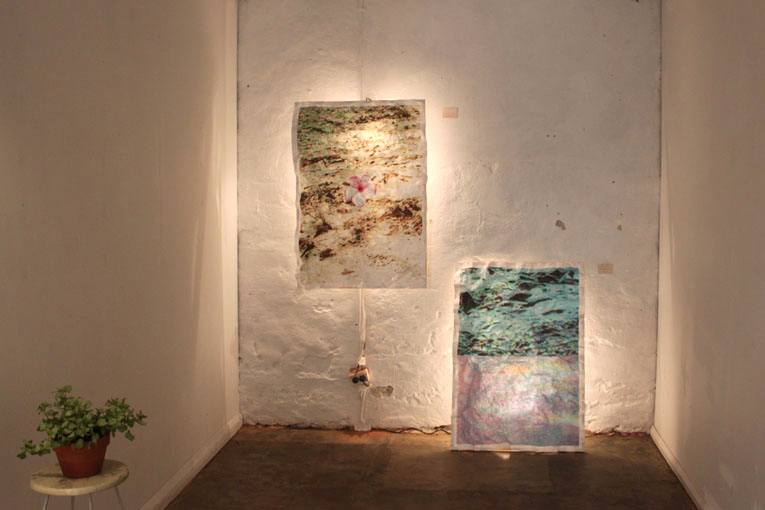 Early art work by Matea on exhibition; back-lit nature-inspired art works in a gallery
