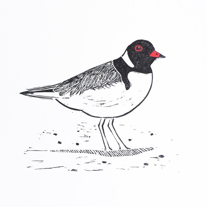 'Hooded Plover' limited edition lino print artwork by Owl Little Print Shop