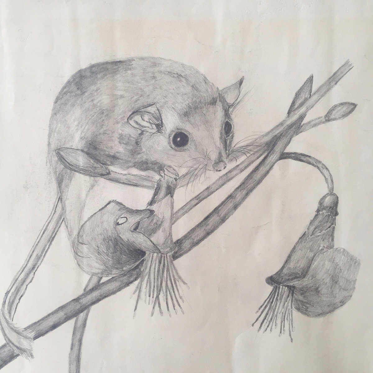 Nicole's interests in art and nature were apparent early on; a sketch from her high school art class
