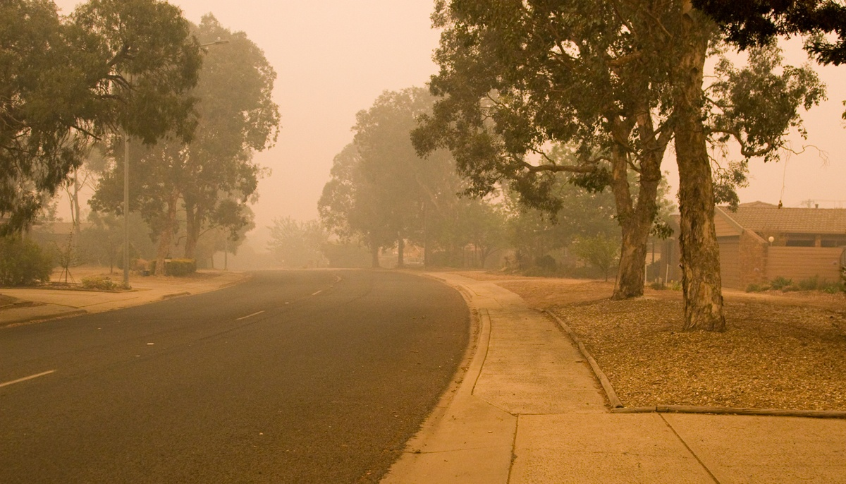 A smokey view down Lindsey and Levi's street in Canberra during January's catastrophic bush fires