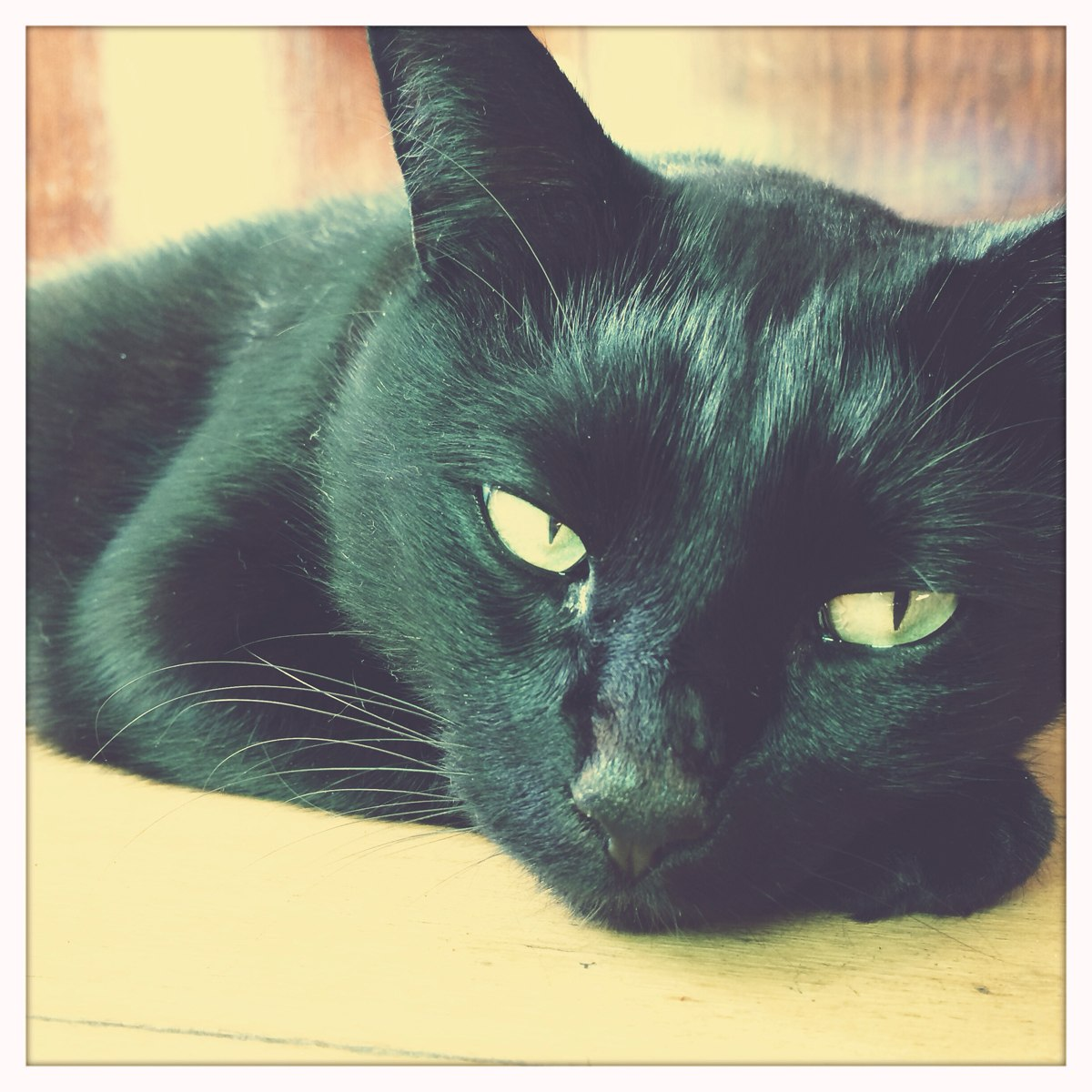 Sweet November Jewelry Workshop Supervisor, Meow Meow the black cat