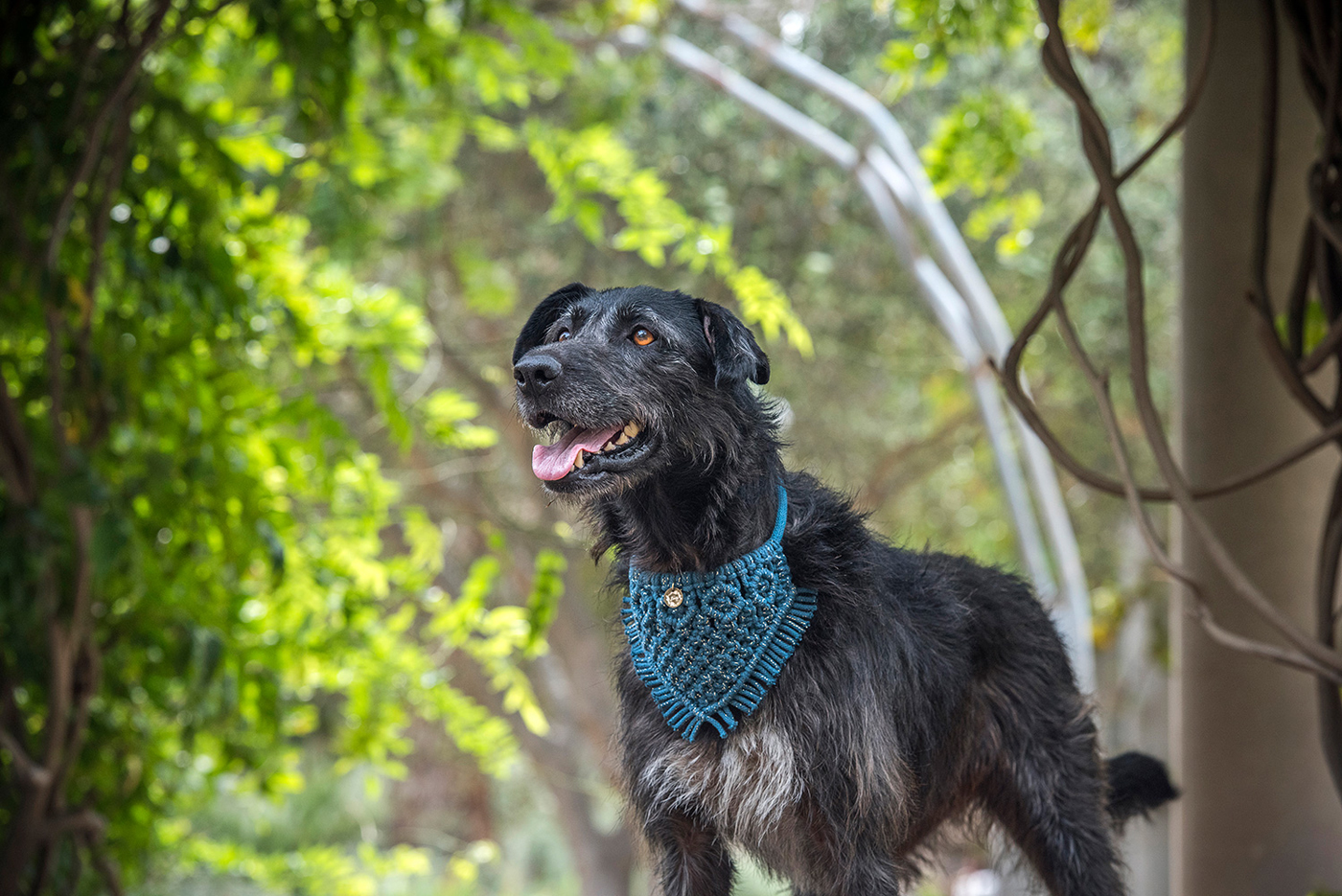 One of Erin's canine models looking smart in a Boho Pet teal macramé decorative collar