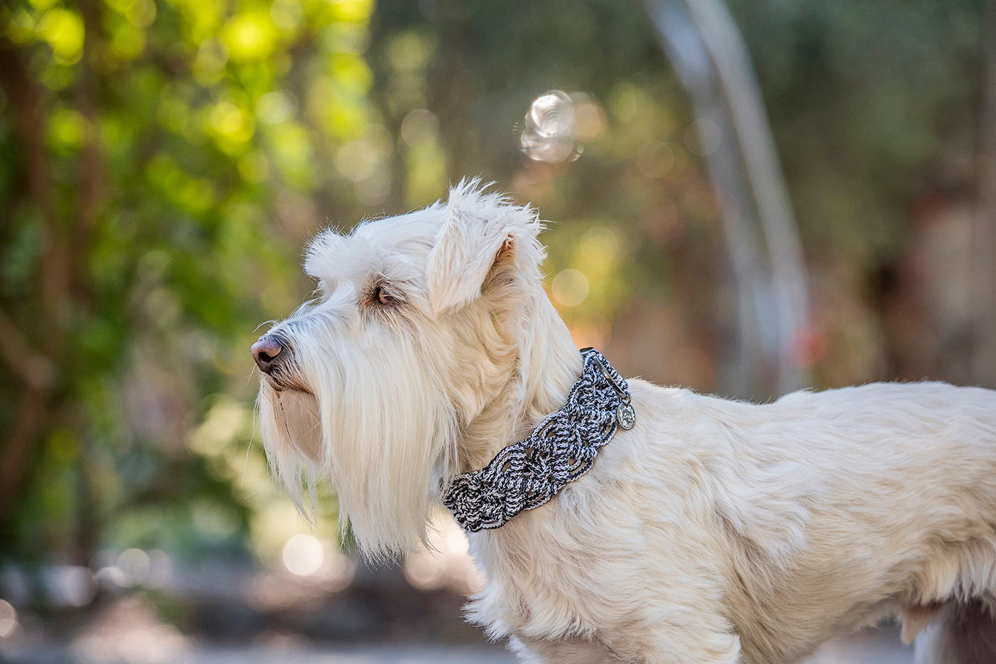 One of Erin's canine models looking smart in a Boho Pet grey macramé decorative collar